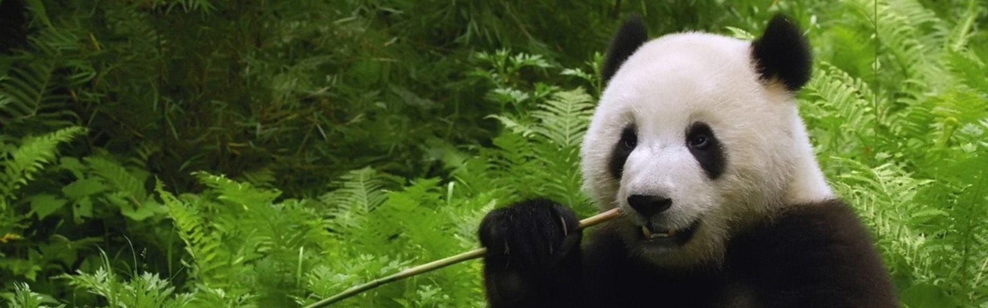 Bamboo Pilgrim